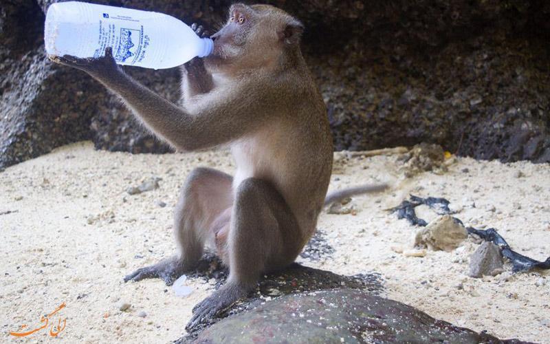 در تایلند برای تماشای میمون ها کجا برویم؟