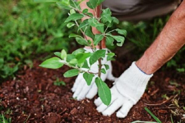 42 اصله درخت در دانشگاه سمنان کاشته شد خبرنگاران
