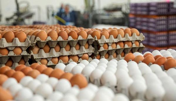 تشکیل کمیته تخصصی ساماندهی بازار مرغ و تخم مرغ