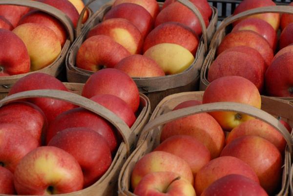 مقاله: میوه های محبوب کانادایی
