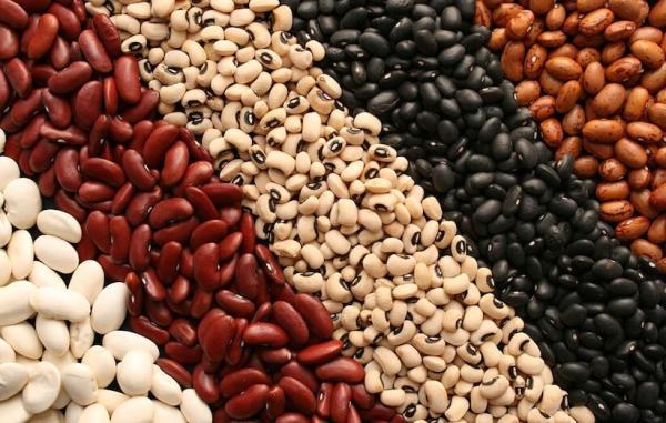 لوبیا؛ خواص عجیب مقرون به صرفه ترین منبع پروتئین دنیا