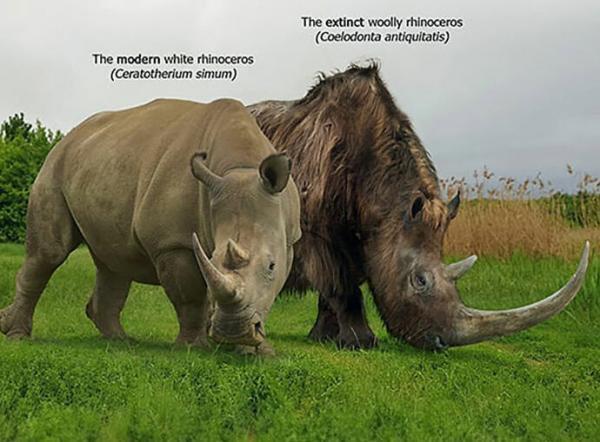 این گرافیست مقدار حیوانات منقرض شده ماقبل تاریخ را با خویشاوندان کنونی آنها در قالب تصاویری شگفت انگیز مقایسه نموده